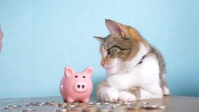 存钱罐和猫配合滑稽的录影金钱概念财务企业会计 金钱猫宠物堆增长的金钱和 影视素材