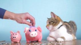 存钱罐和猫配合滑稽的录影金钱概念财务企业会计 金钱猫宠物堆增长的金钱和 股票录像