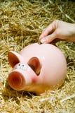存钱罐,储款,货币 免版税库存图片