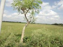 孟加拉国的自然秀丽 库存照片