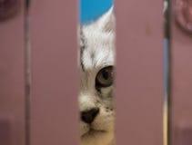 孟加拉小猫 免版税库存图片