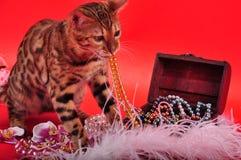 孟加拉猫和首饰 免版税库存照片