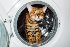 孟加拉猫坐在一台白色洗衣机里面 库存图片