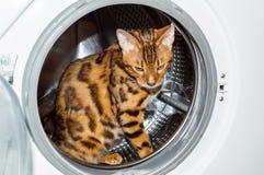 孟加拉猫坐在洗衣机里面 图库摄影