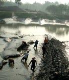 孟加拉的本质 免版税库存照片
