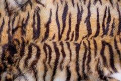 孟加拉老虎皮肤,毛皮纹理 免版税库存照片
