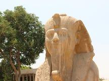 孟菲斯雪花石膏狮身人面象。 图库摄影