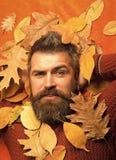 季节和秋天 库存图片