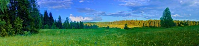 季节夏天森林领域风景风景全景 免版税库存图片