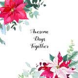 季节性与一品红混杂的花束的角度花卉框架  库存例证