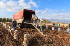 季节性农业工作者 库存照片