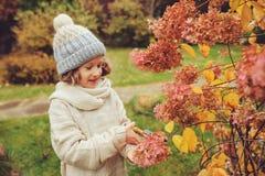 季节性庭院工作在晚秋天,儿童女孩帮助切开与pruner的八仙花属灌木 库存照片
