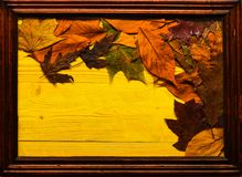 季节性构成概念 在木纹理的秋天五颜六色的叶子在框架 槭树和橡木烘干了在黄色放置的叶子 库存图片