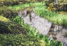 季节性池塘和绿色植物水反射庭院室外的春天 图库摄影