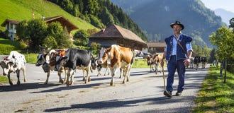 季节性牲畜移动事件在Charmey 免版税库存照片
