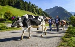 季节性牲畜移动事件在Charmey 库存照片