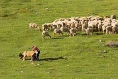 季节性牲畜移动 免版税图库摄影