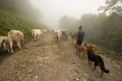 季节性牲畜移动 免版税库存照片