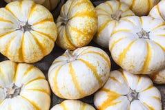 季节性白色和黄色微型南瓜的一汇集贴墙纸 免版税库存图片