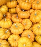 季节性秋天橙色微型南瓜的一汇集 图库摄影