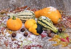 季节性秋天金瓜加上叶子和被盖的橡子装饰 图库摄影