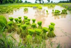 季节性种田在乡下 图库摄影