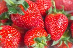 季节性莓果 免版税库存图片