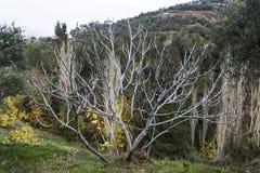 季节改变了这棵美丽的树 免版税库存照片