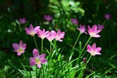 季节桃红色花  库存照片