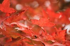 季节的秋天在Tai钳子hk 免版税库存图片