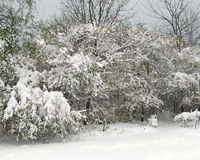 季节的第一降雪 免版税库存照片