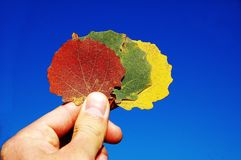 季节的颜色 免版税图库摄影
