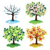 季节结构树 库存图片