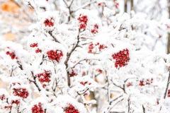 季节问候和假日庆祝 库存照片