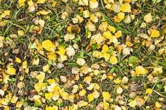 季节,秋天,摘要,叶子,自然,季节性,黄色,红色, 库存照片