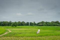 季风农村的印度 库存照片