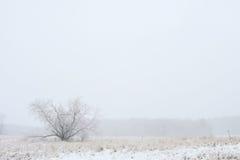 孤独和冷 免版税库存图片