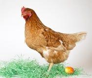 孤独复活节彩蛋的母鸡 免版税库存图片