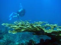 孤独深的潜水员 库存图片