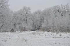 孤独的人在冬天森林里 免版税图库摄影