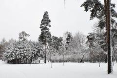 孤独的人坐在用雪盖的华美的北杉木中的一条长凳在冬天公园 免版税库存照片