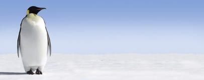 孤独的企鹅 库存照片