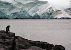 孤独的企鹅 库存图片