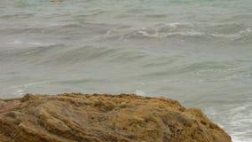 孤独的天鹅在有黄色岩石的,在天空的密集的灰色云彩浪潮起伏的风大浪急的海面 影视素材