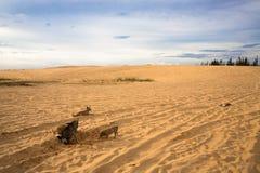 孤独的家庭狗 免版税库存照片