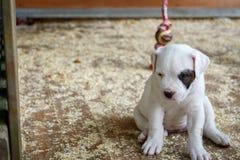孤独的小狗 免版税库存照片