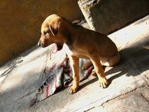 孤独的小狗 免版税库存图片
