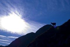 孤独的山羊 免版税图库摄影