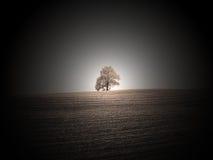 孤独的橡木 免版税库存照片