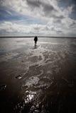 孤独的海运wadden流浪汉 免版税库存图片